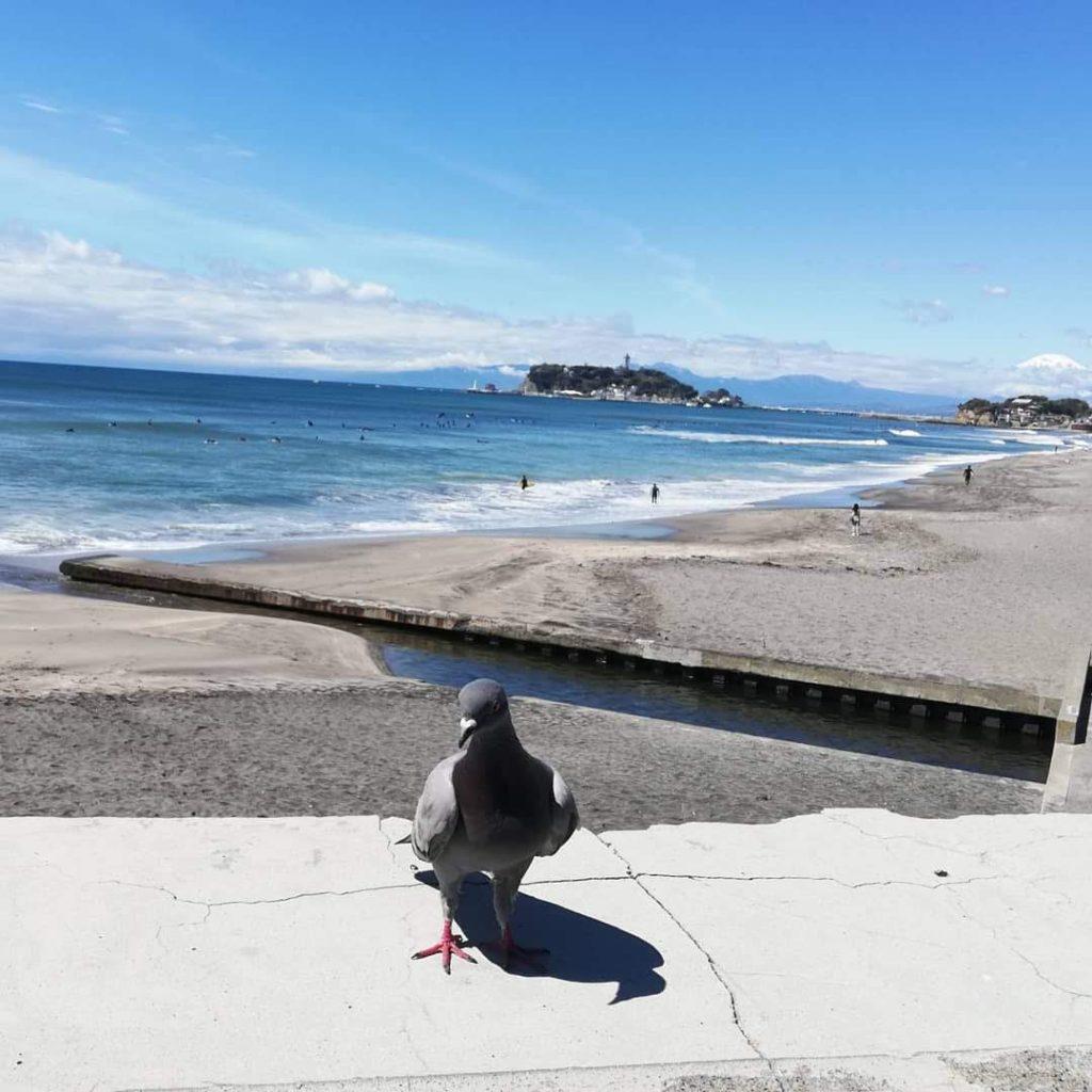 インスタ映えする鳩と富士山